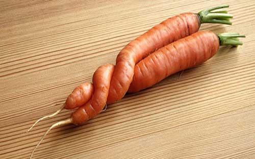 陶朗分选剔除异形胡萝卜