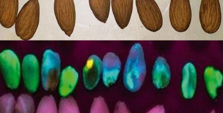 陶朗光学检测下的黄曲霉毒素