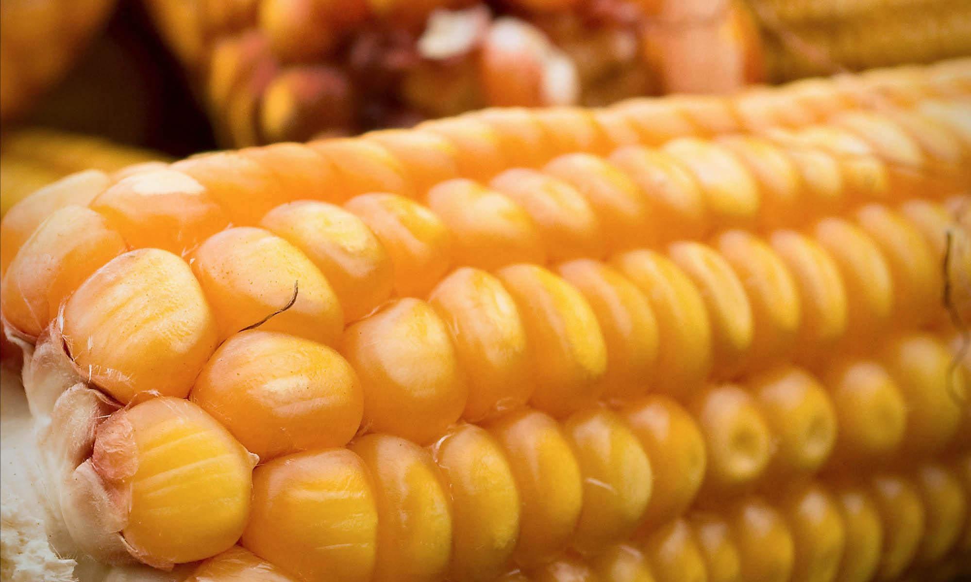 玉米粒分选