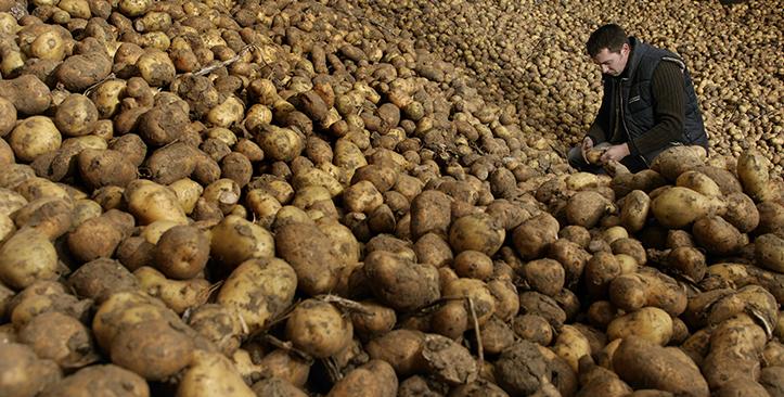 保障土豆食品安全