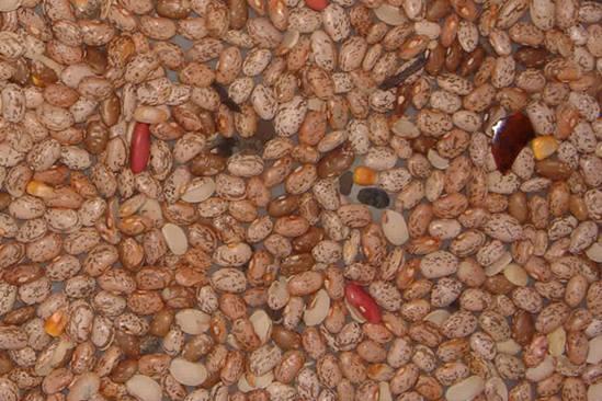 beans-5