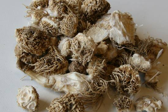 garlic-4