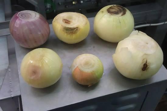 onions-6