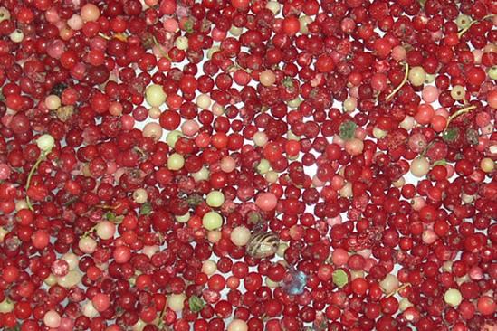 redberries-3