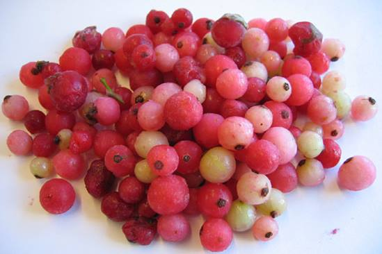 redberries-4