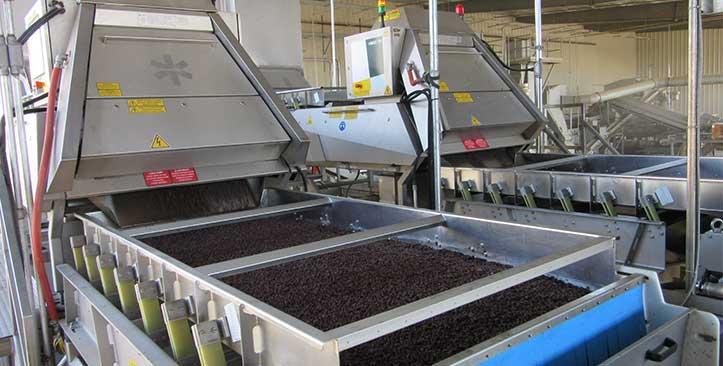 Sun-Valley葡萄干公司选用了陶朗的分选设备