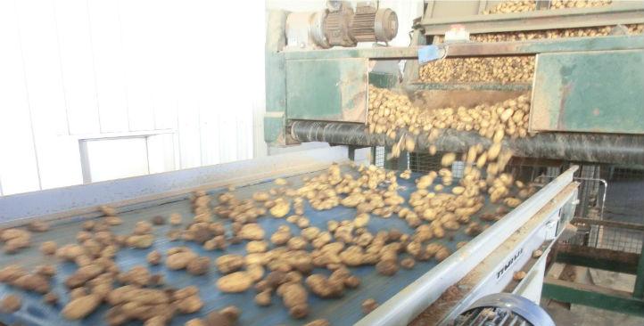 unwashed-potatoes-2