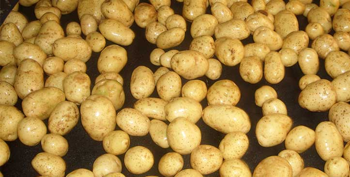 washed-potatoes-3