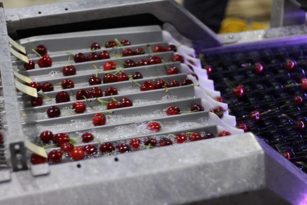 小型水果的全自动分选和包装方案